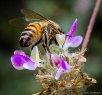Beebeautiful