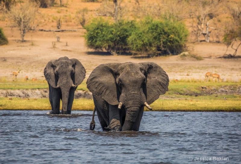 Chobe Crossing - ID: 15037796 © Jessica Boklan