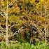 2Autumn Bald Cypress - ID: 15038182 © Carol Eade