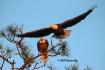 Eagle Watching He...
