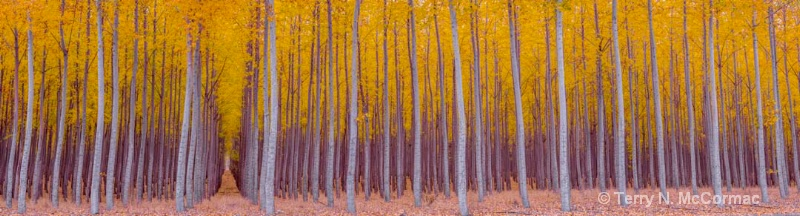 Trees - ID: 15042133 © TERRY N. MCCORMAC