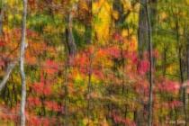Digita Fall