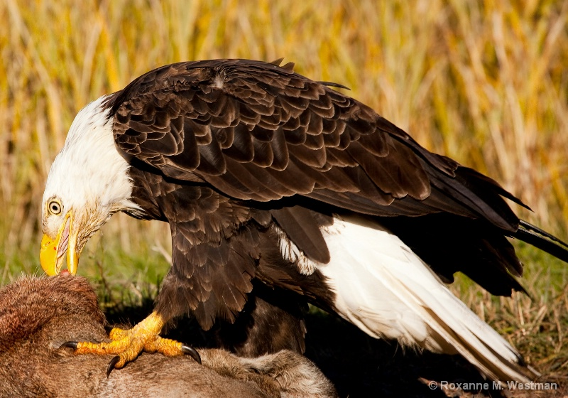 Lunchtime - ID: 15047311 © Roxanne M. Westman
