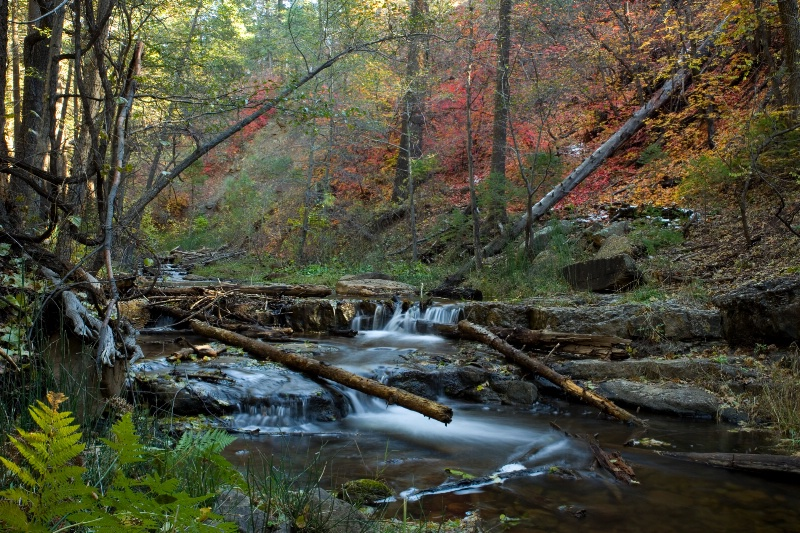 Creekside Color