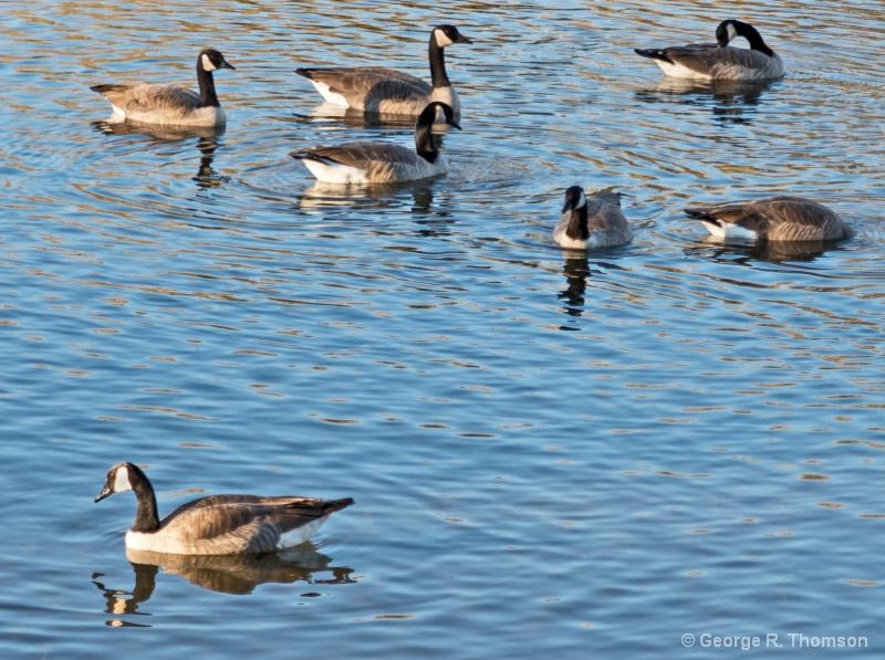 At Ease At Home, The Goose Way