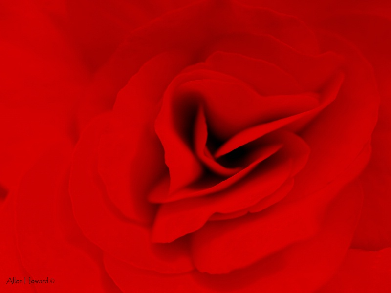 """So Red The Rose"""