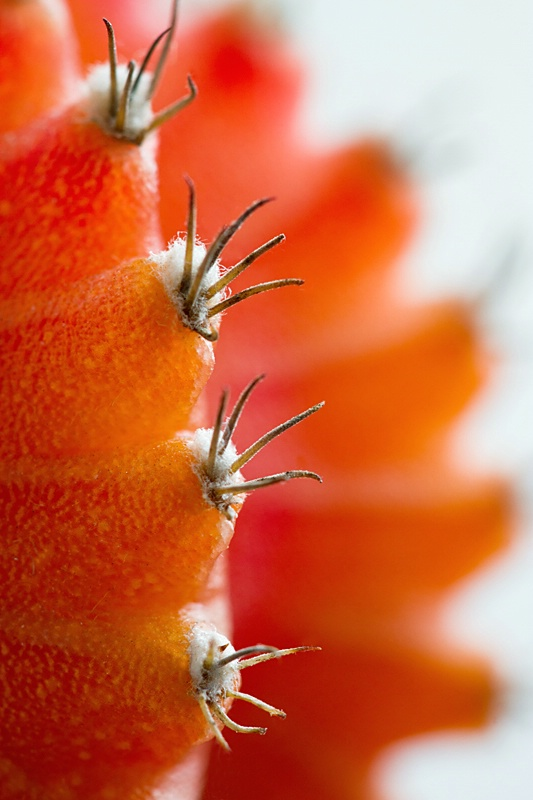 Cactus Hairs