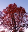 trees turning red...