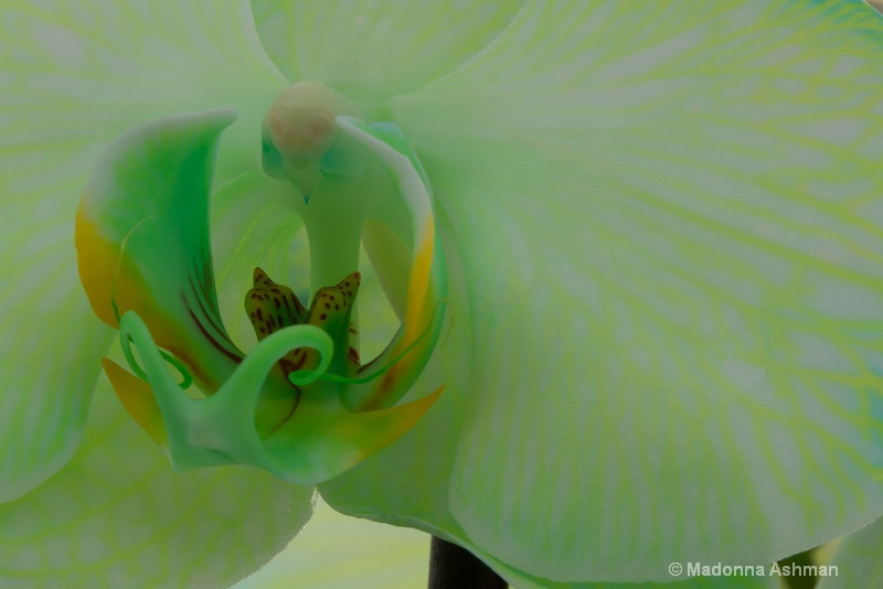green-orchid