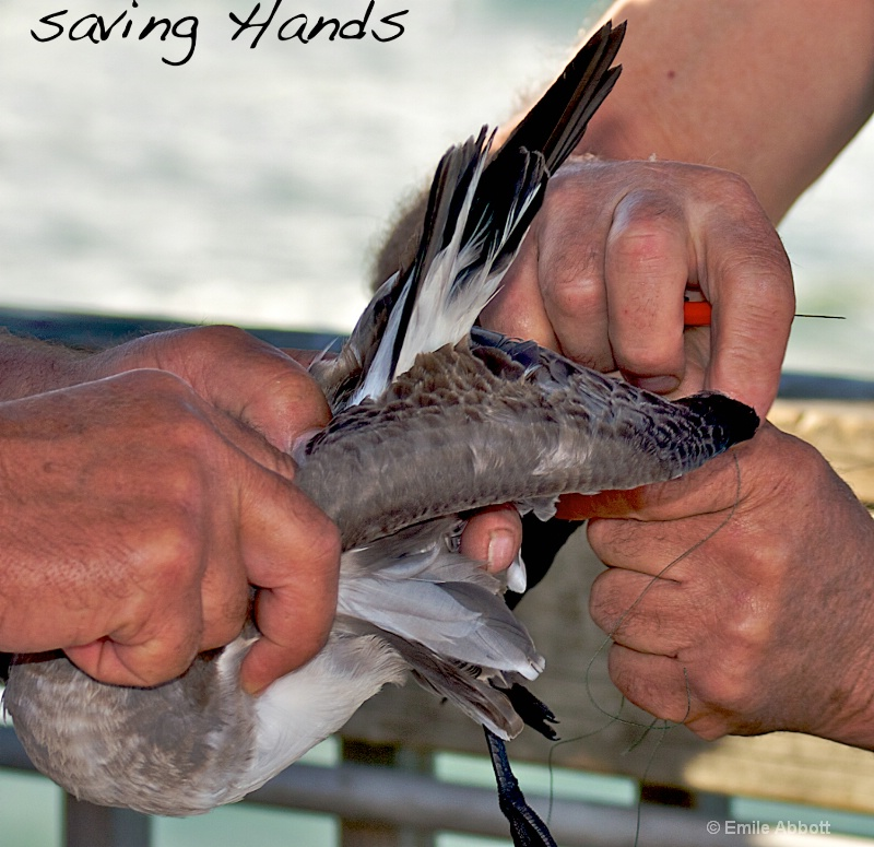 Saving Hands - ID: 15062334 © Emile Abbott