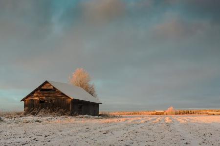 Winter Sun On The Old Barn House