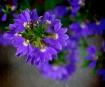 Flowers On The Wa...