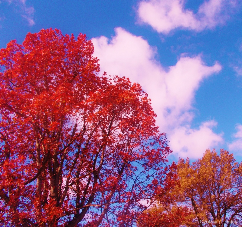 Autumn trees turning colors