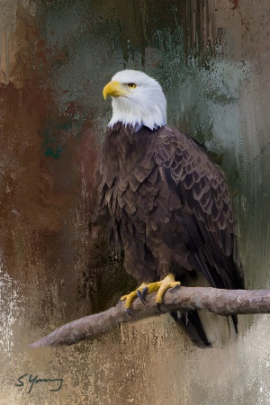 Eagle; Norfolk Botanical Garden; Virginia