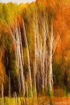Artistic Fall Trees Abstract 10-26-15 280