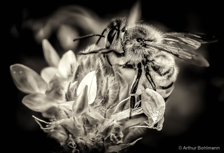 Bee Colorless