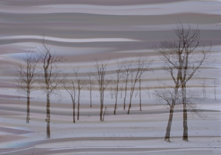 The Whimsey of Trees