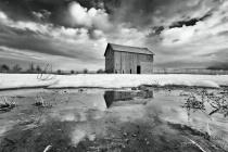barn in a corn field