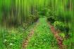 Flowered Road