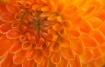Painted Orange Da...