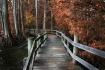 The Boardwalk #2