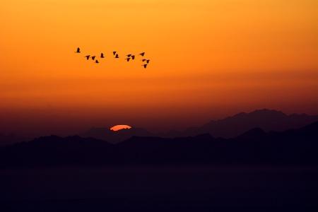 Flight at Dawn.