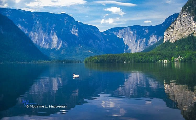 Swan on Lake Hallstat - Austria - ID: 15080468 © Martin L. Heavner