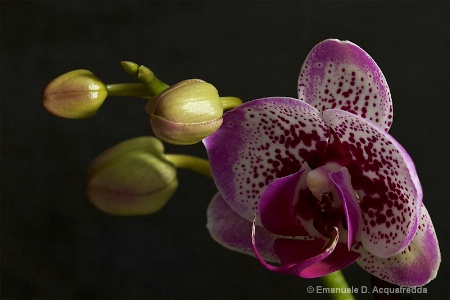 January 2016 Purple Orchid