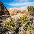 2joshua tree-2566 - ID: 15083471 © John S. Brown