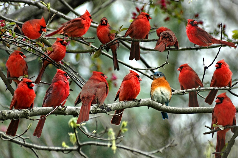 Sorry, They Ran Out Of Cardinal Costumes!