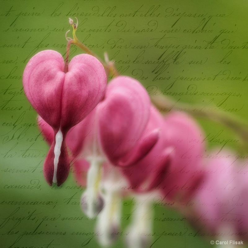 Love Letter from the Heart - ID: 15088215 © Carol Flisak