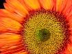 Macro Bloom
