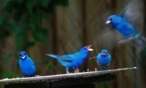 Antics at the Birdfeeder