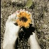 "© Carine C. Lutz PhotoID# 15092221: ""Happy"" from Mark's sunflowers series"