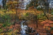 Stream in Autumn