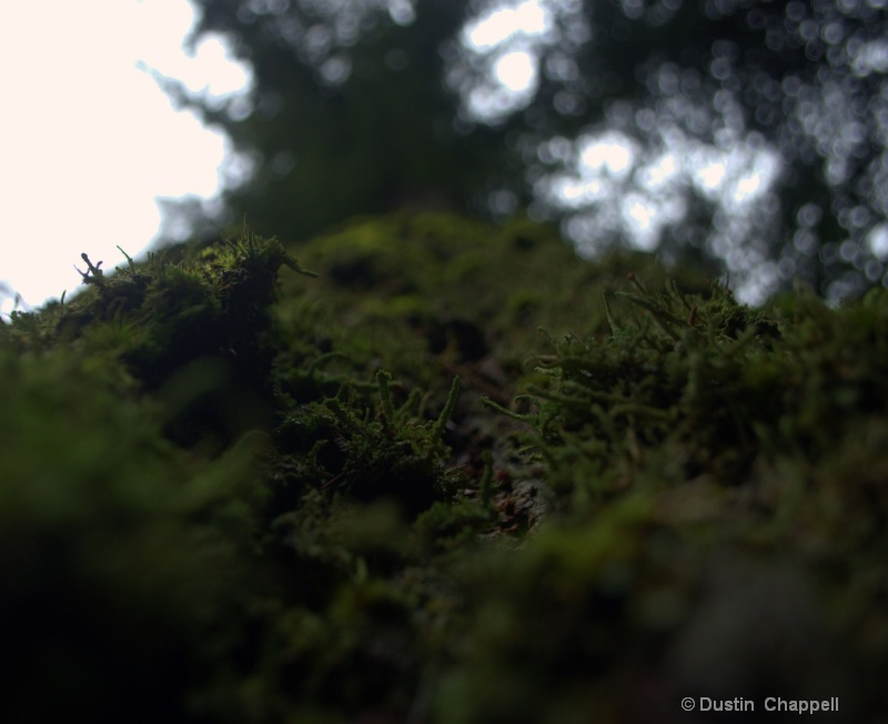 I like high depth of Field photography but I wante