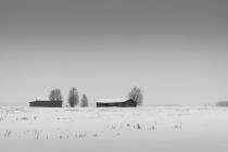 Trees And Barns In Snowfall