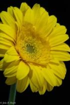 A Daisy -- Think Spring