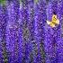 © Natasha Pliss PhotoID # 15103045: Purple jungle
