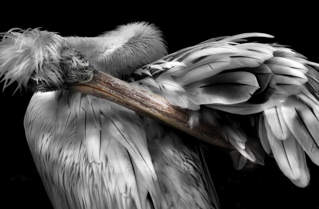 The Beak Beneath My Wings
