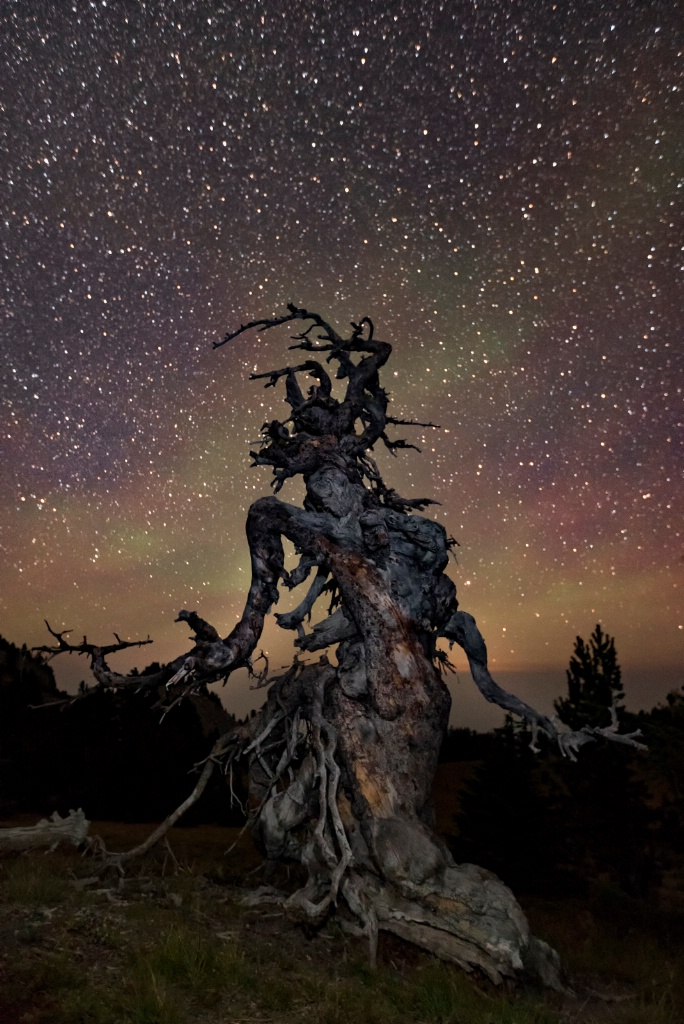 Dryad Among The Stars