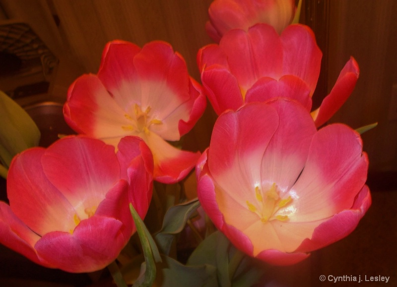 Pretty bouque of pink tulips