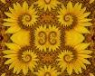 Spunflower Too