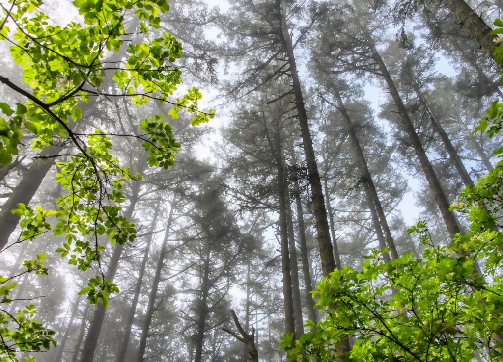 Green in the Fog