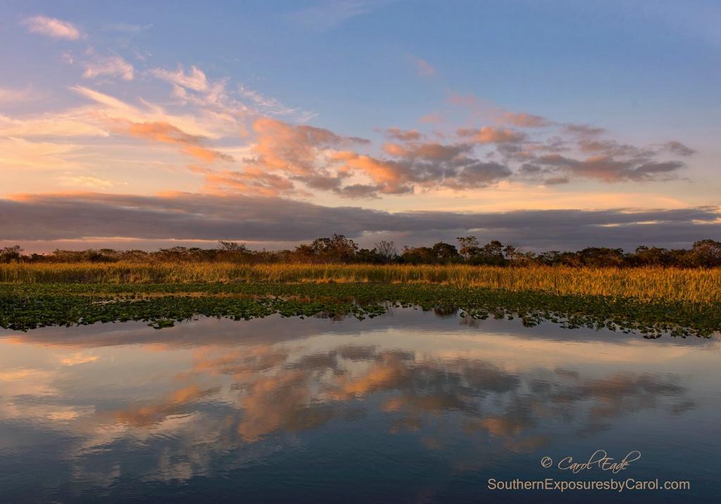 The Glades - ID: 15118286 © Carol Eade