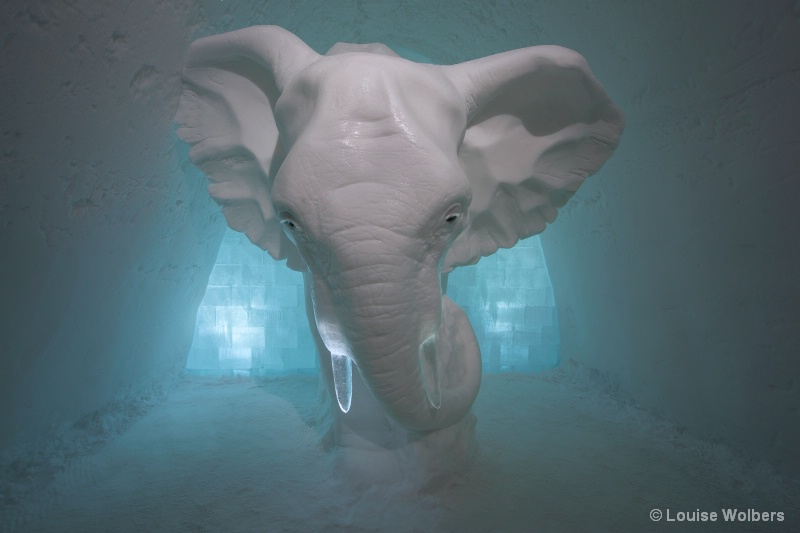 Elephant in the Room - ID: 15118569 © Louise Wolbers