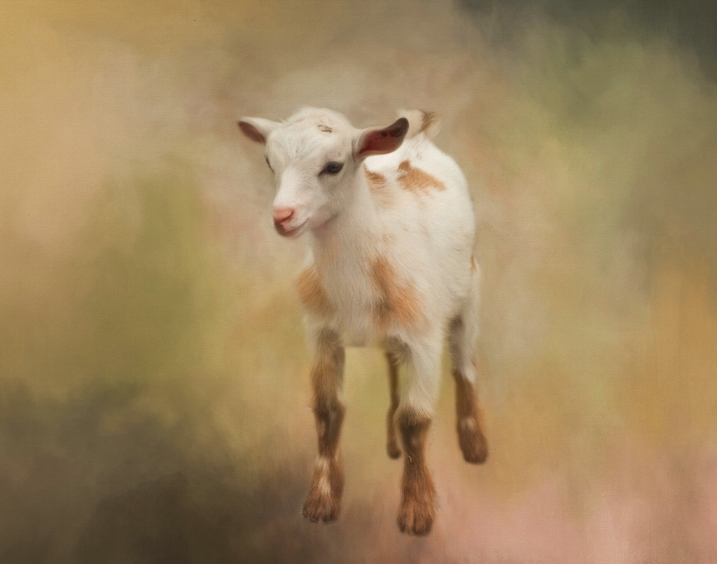 Baby Billy Goat
