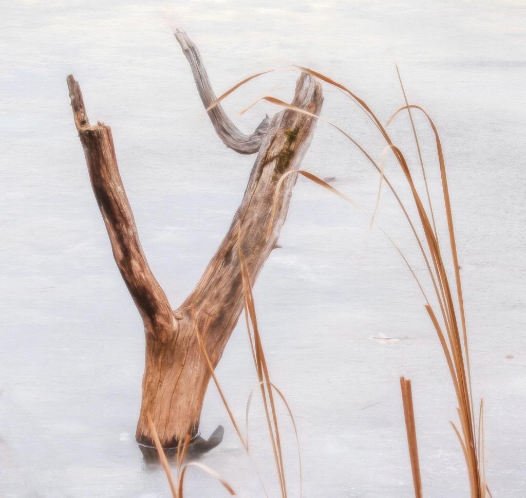A Tree Stump In Winter