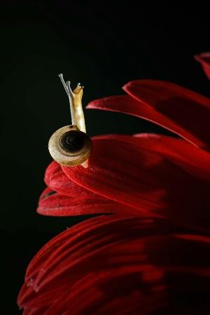 Glowing Snail
