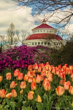 Zoo tulips